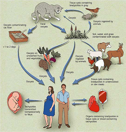 how to know if i have toxoplasmosis