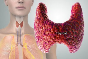 Whoever told us that thyroid function was so important and could be one of the keys to good health?